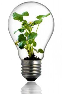 bulb-216975